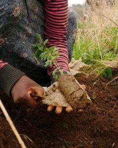 Help Plant Trees!